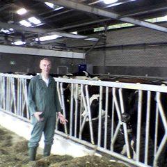 Cows (1)