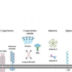 Molecular battle between host and bacterium: recognition in innate immunity