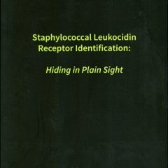 Staphylococcal leukocidin receptor identification: Hiding in Plain Sight