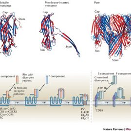 Leukocidins: staphylococcal bi-component pore-forming toxins find their receptors