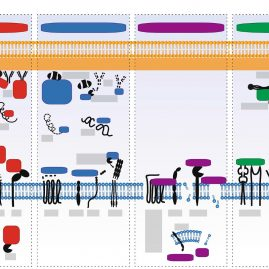 Staphylococcal Immune Evasion Proteins: Structure, Function, and Host Adaptation